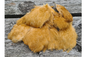 Short Rooster Feather Natural Ginger